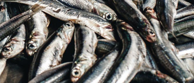 Pesci Azzurri: Origine del nome e proprietà nutritive